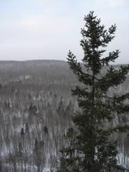 Tree Against Barren Hill by deadeye-stock