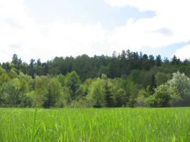 Field and Treeline by deadeye-stock