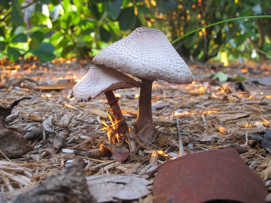 more shrooms. by ANSTADT
