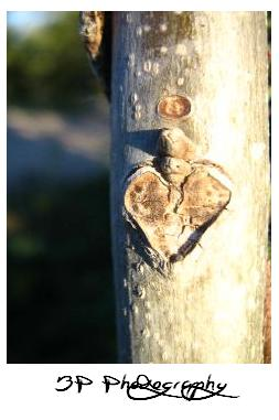 Nature In Love by BlurredPerspectives