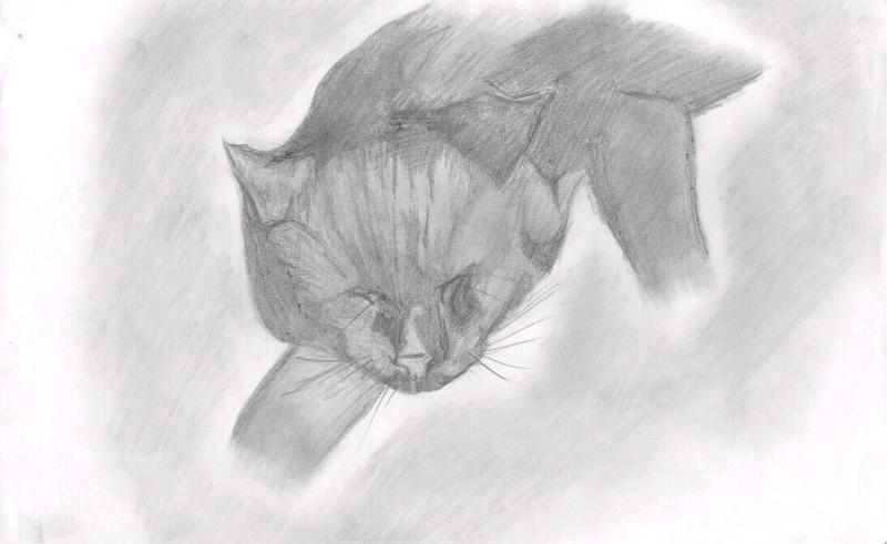 Dreaming cat by jbdevart