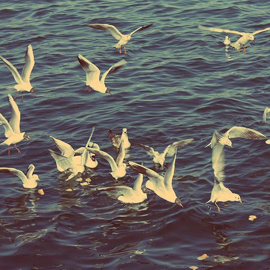 Birds by SphereFF7