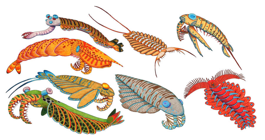http://fc04.deviantart.net/fs70/i/2010/276/3/2/anomalocaris_group_by_nocturnalsea-d2zyzbs.jpg