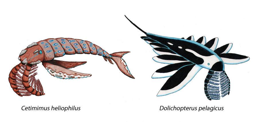 Ceticarids by NocturnalSea