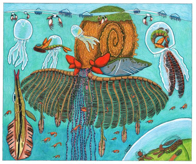 False Ammonite by NocturnalSea