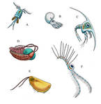 Glowworm Nautilus Passengers