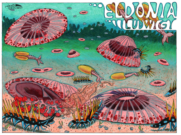 Eldonia ludwigi by NocturnalSea
