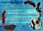 Cabinet of Curiosities: Flatworm Mimics