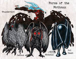 Forms of the Mothman by NocturnalSea