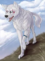 White Eye wandering