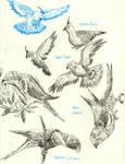Park Birds
