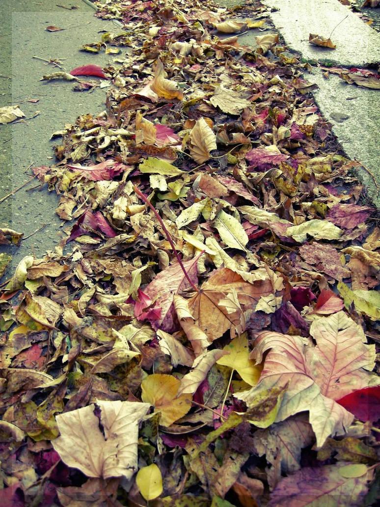 Leaves me behind