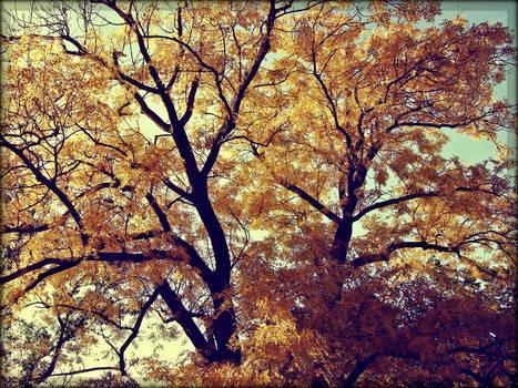 Autumn style memories