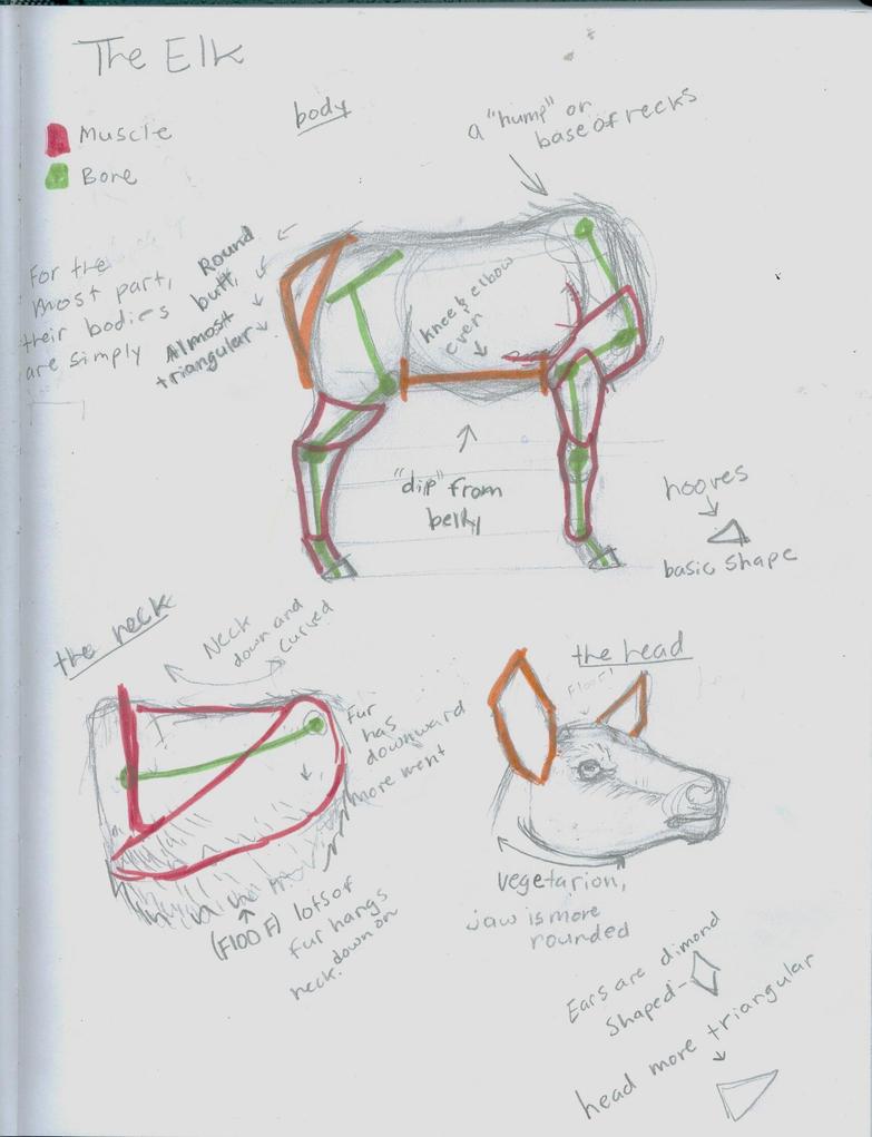 Elk Anatomy Studies by GunChica on DeviantArt