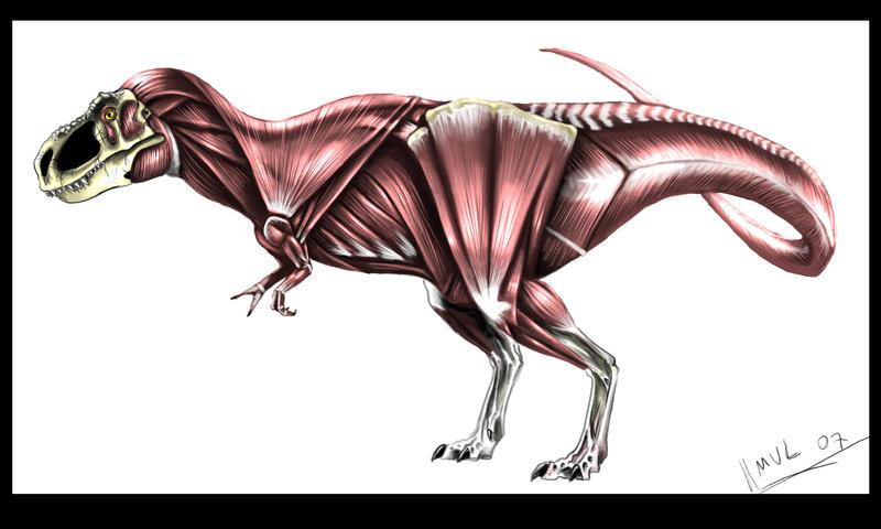 Perfecto Tiranosaurio Rex Anatomía Ideas - Anatomía de Las ...
