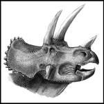 Triceratops horridus portrait