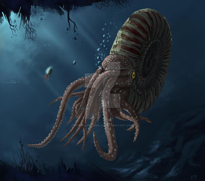 Ammonite by highdarktemplar