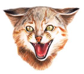 Gato Colo-Colo_Colo-Colo cat