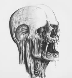 Rotten skull