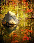 Reflections-of-Nature