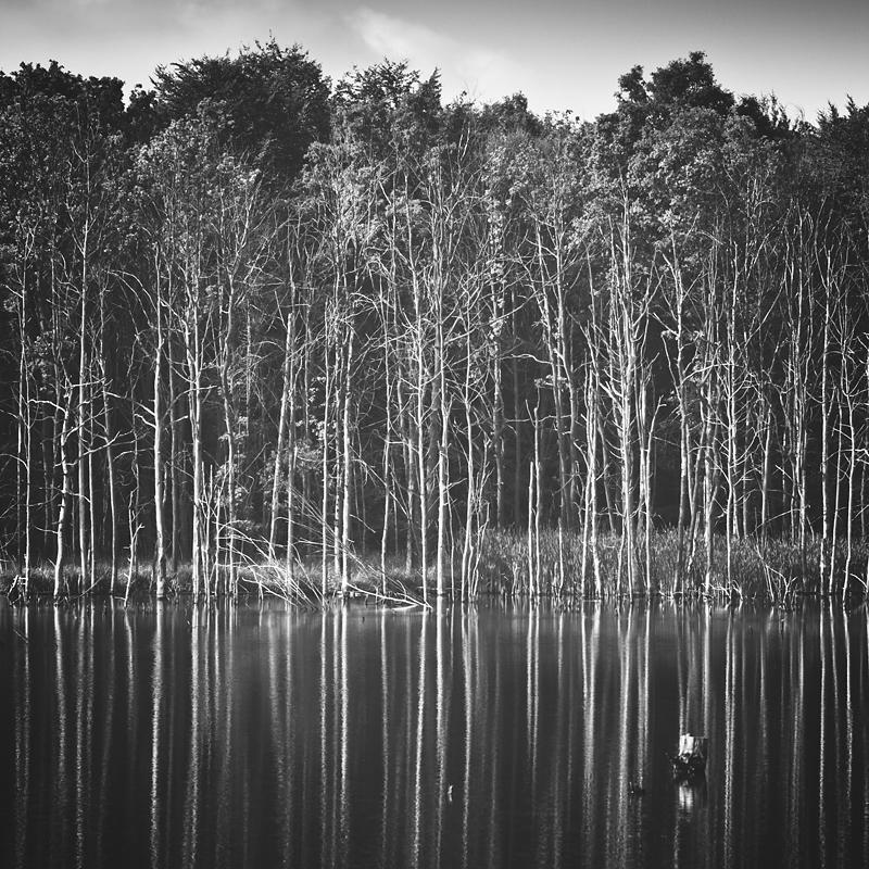 Water wood by RafalBigda