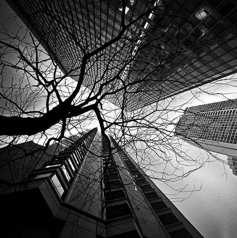 Chicago CLXXVI by DanielJButler
