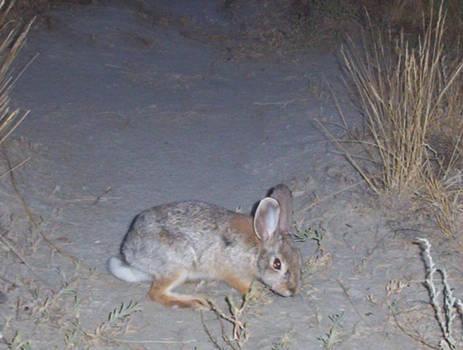 Bunny on a Wednesday Night