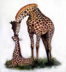 Giraffe by evie9207