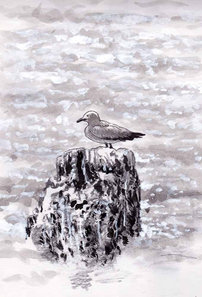 Coloso bay seagull by Osmont2