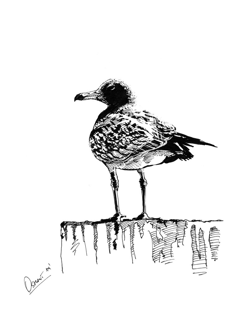 Center Bay Seagull by Osmont2