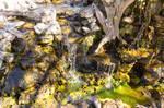 Waterfall in the Sunlight