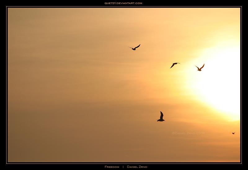 Freedom by DanielZrno