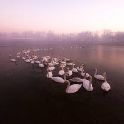 Dial S for Seventy Swans by DanielZrno