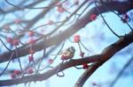 .Birds bring the Spring.