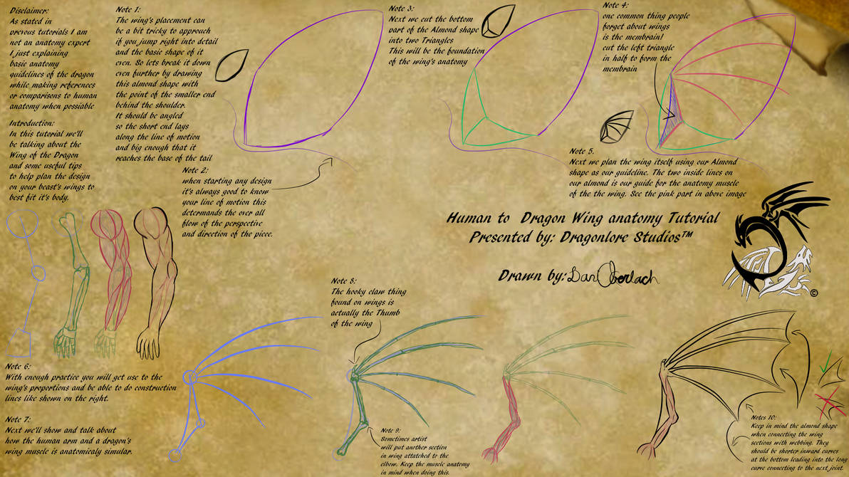 Human To Dragon Wing Anatomy Tutorial By Dragonlorestudios On Deviantart
