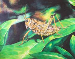 Patient Grasshopper by magnifulouschicken