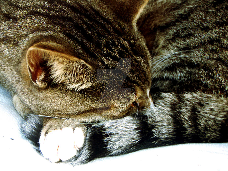 sleeping cat__ cat photos ftw by DrawnArt93
