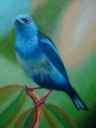 The Blue Bird by ScaroDj