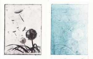 Dandelions by Helgajas