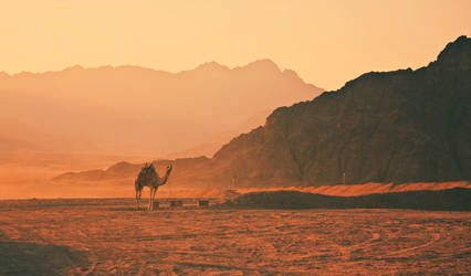 Sunset Camel by jamminsession