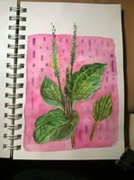 plant by ajcrwl