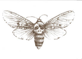 Skull Moth by DanielleHope
