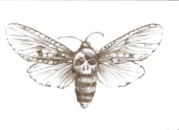 Moth drawing - photo#6