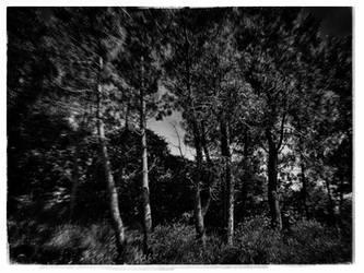 Those Trees by soultaker82