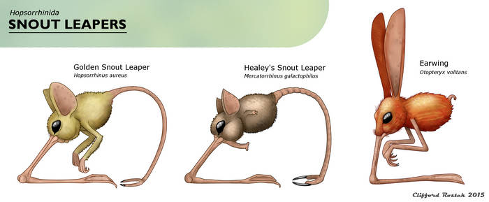 Snout Leaper Identification Chart