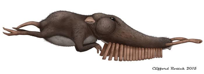 Pipeorgan Tasselsnouter (Rhinochilopus musicus)