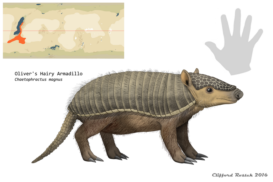 nea___oliver_s_hairy_armadillo_by_clawed