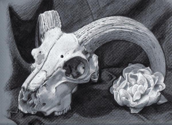 1. Ram Skull