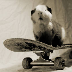 sk8rpig by AndySimmons