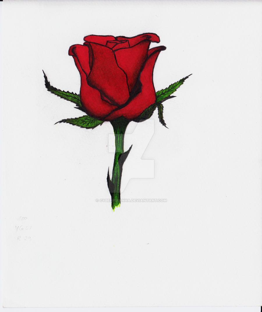 Rose by CyberPiranha
